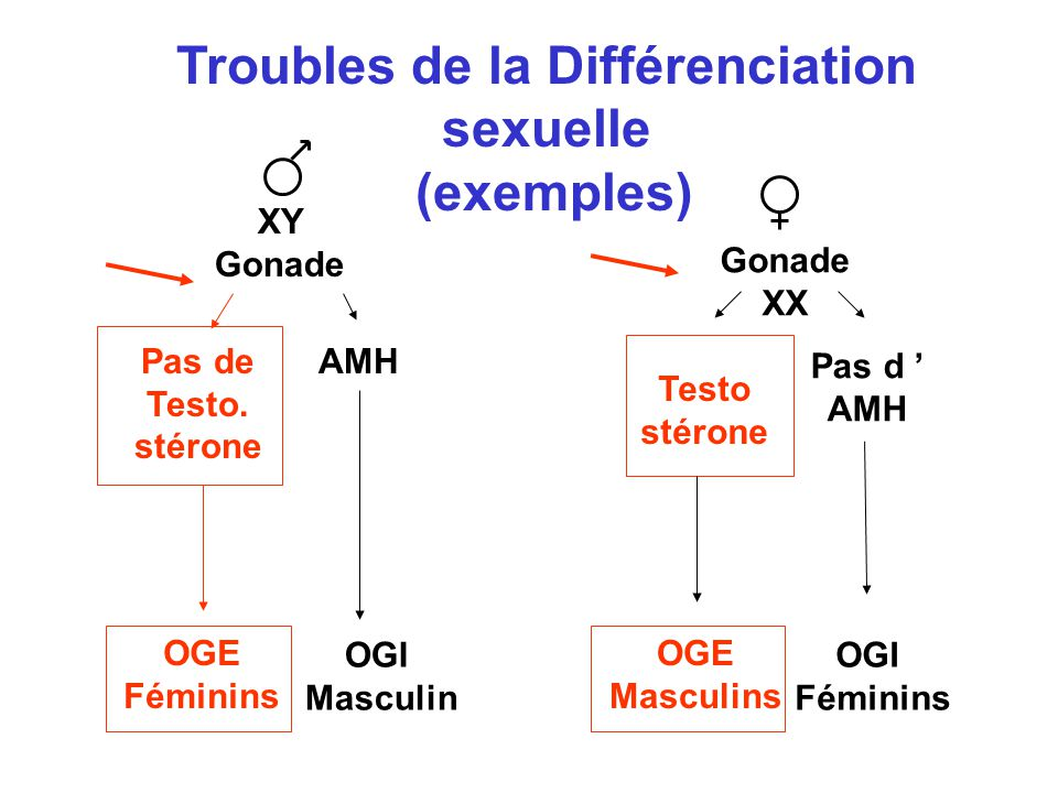 Trouble d'attachement masculin adulte