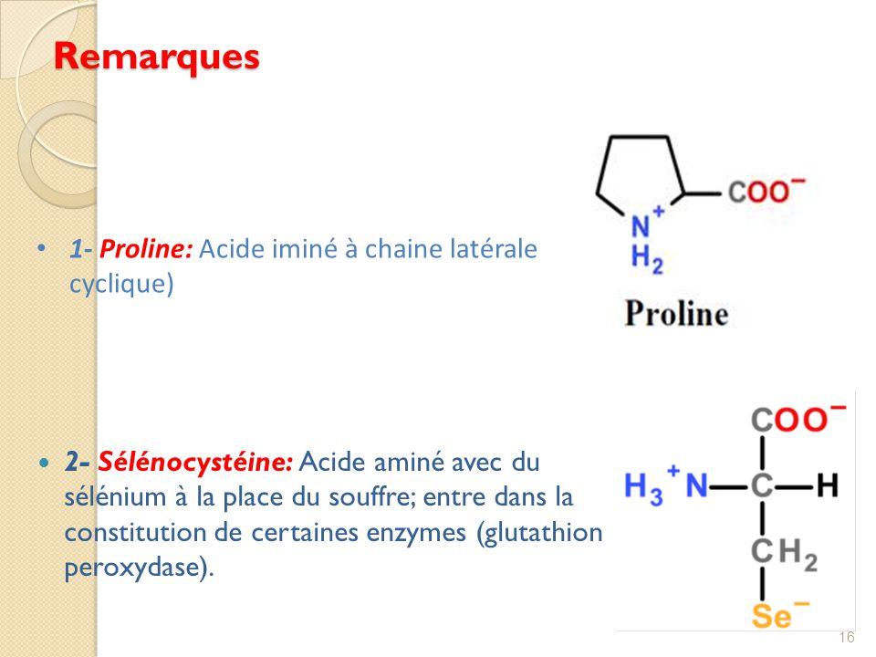 Remarques 1- Proline: Acide iminé à chaine latérale cyclique)