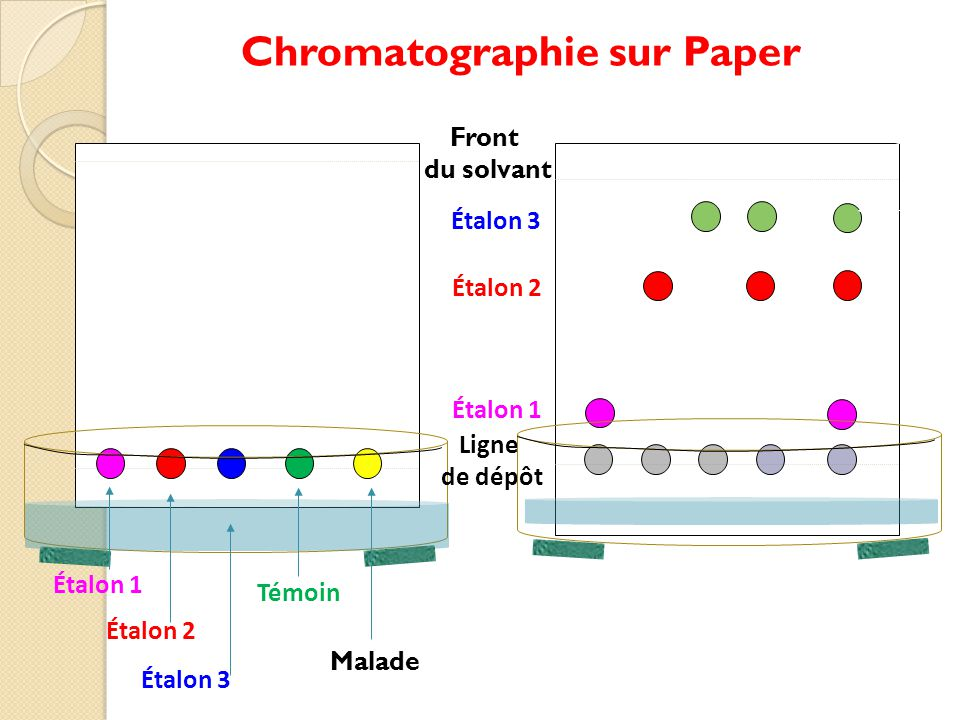 Chromatographie sur Paper