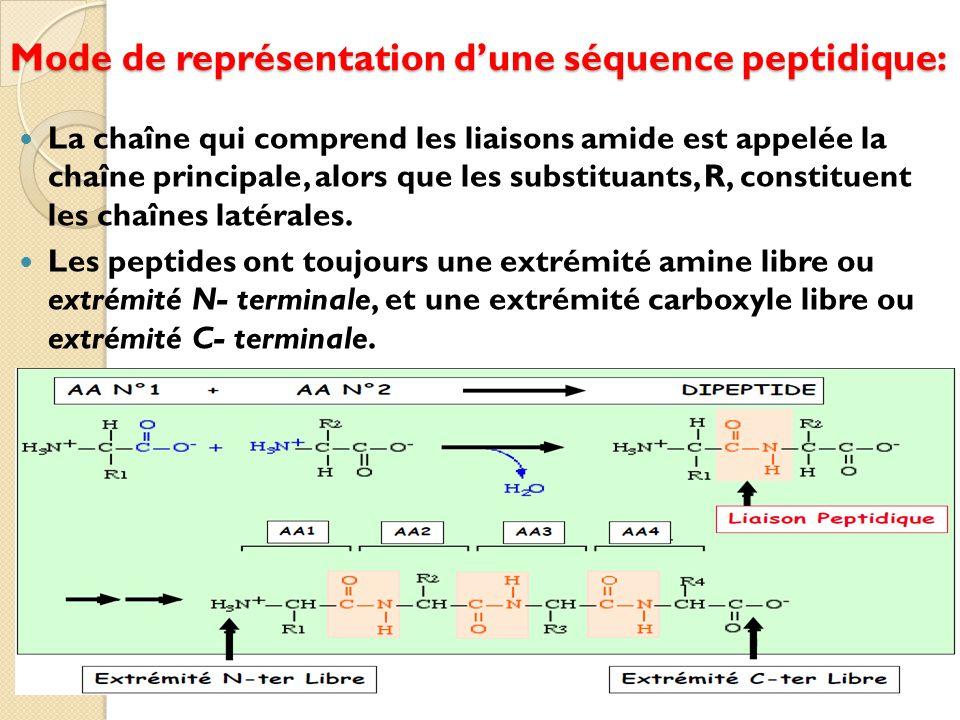 Mode de représentation d'une séquence peptidique: