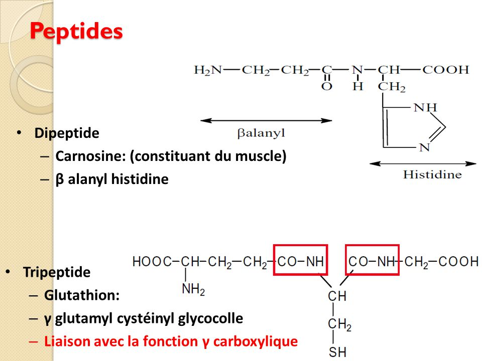 Peptides Dipeptide Carnosine: (constituant du muscle)