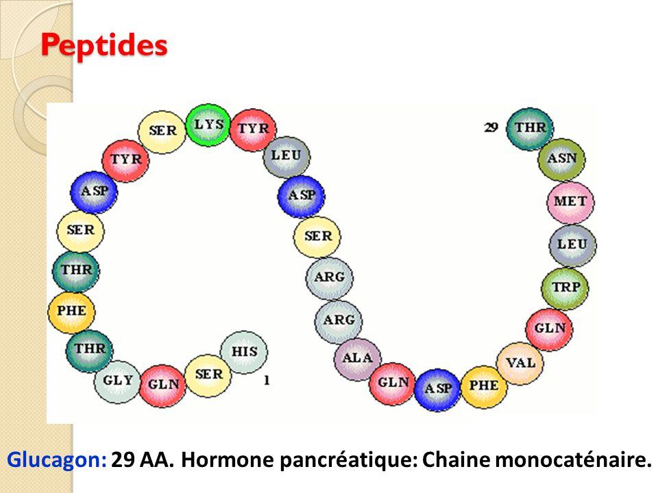 Peptides Glucagon: 29 AA. Hormone pancréatique: Chaine monocaténaire.
