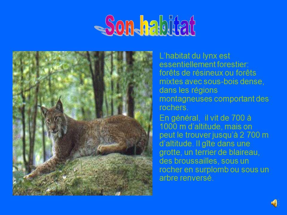 Le lynx ppt video online t l charger for Habitat du monde