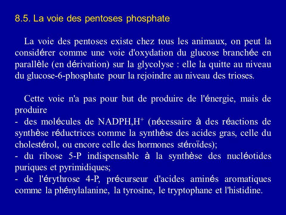 8.5. La voie des pentoses phosphate