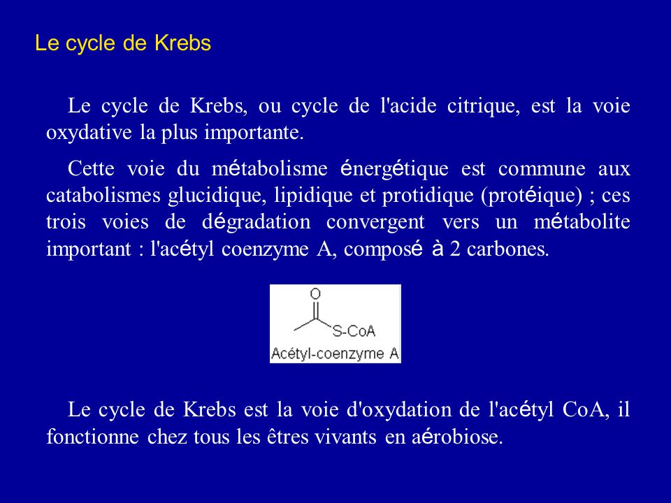 Le cycle de Krebs Le cycle de Krebs, ou cycle de l acide citrique, est la voie oxydative la plus importante.