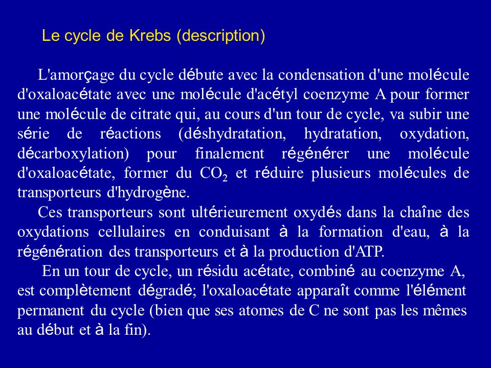 Le cycle de Krebs (description)