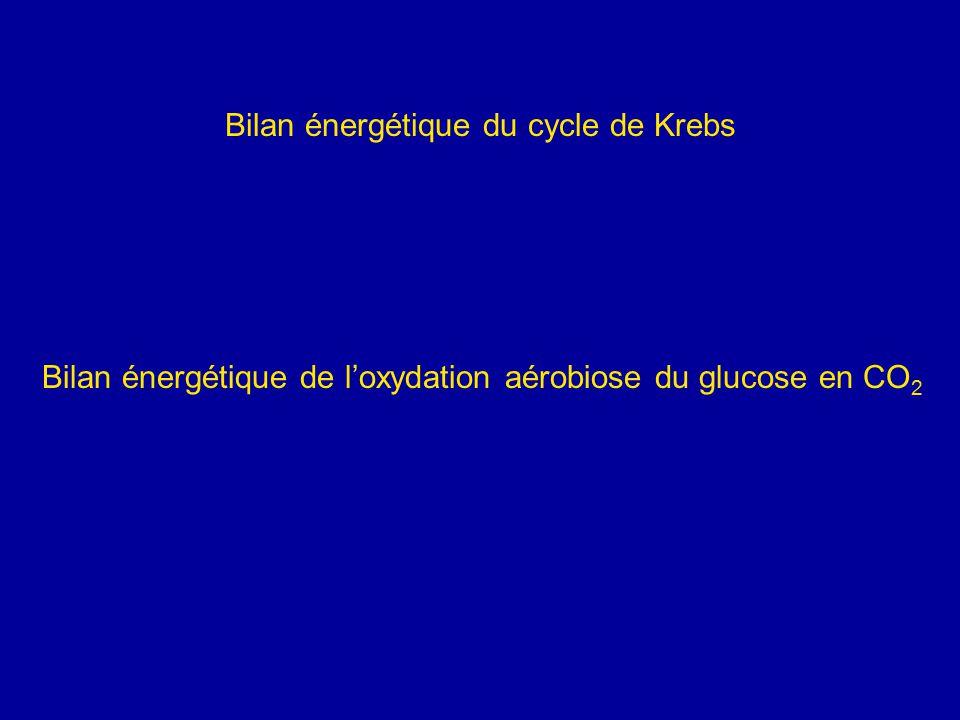 Bilan énergétique du cycle de Krebs