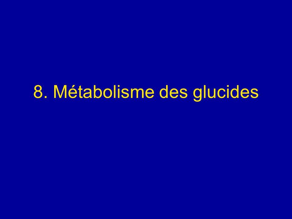 8. Métabolisme des glucides