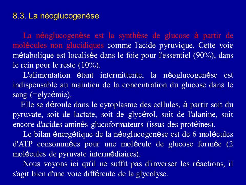 8.3. La néoglucogenèse