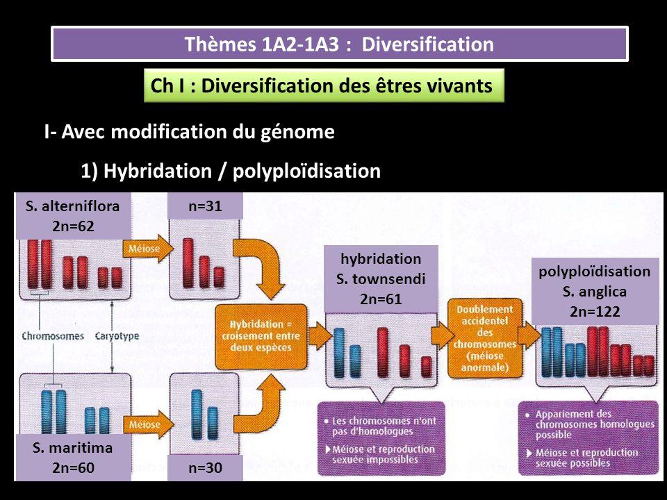 Thèmes 1A2-1A3 : Diversification