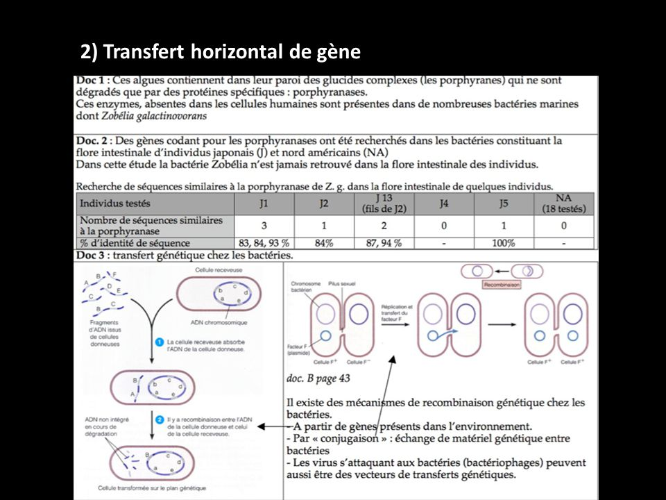 2) Transfert horizontal de gène
