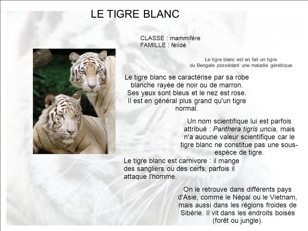 Le tigre blanc le tigre blanc se caract rise par sa robe ppt video online t l charger - Nom de famille americain les plus portes ...