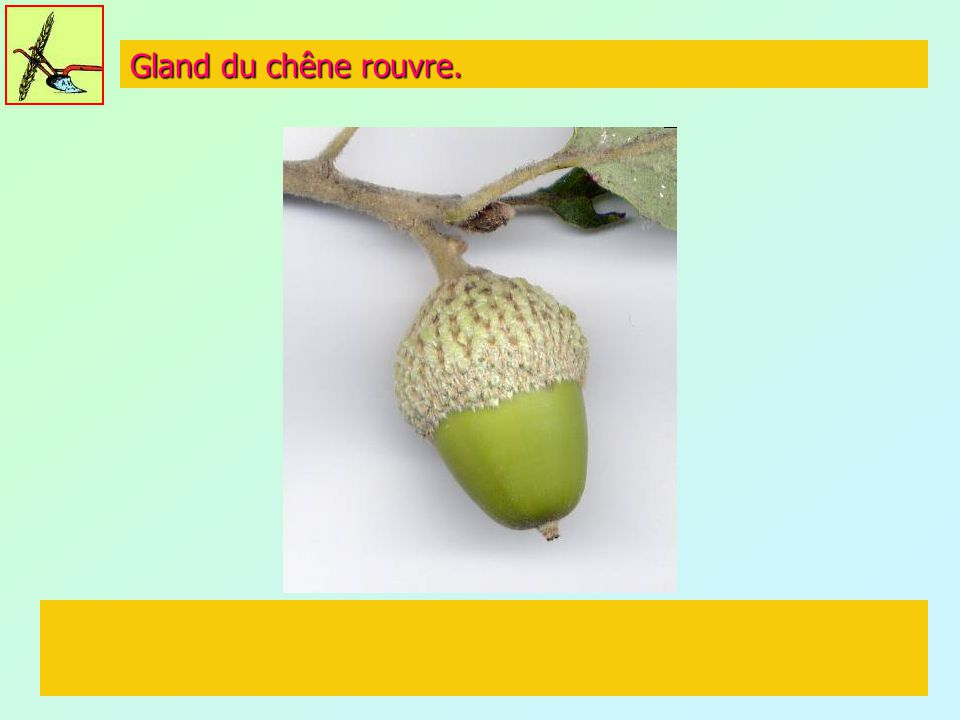 Rencontre gland