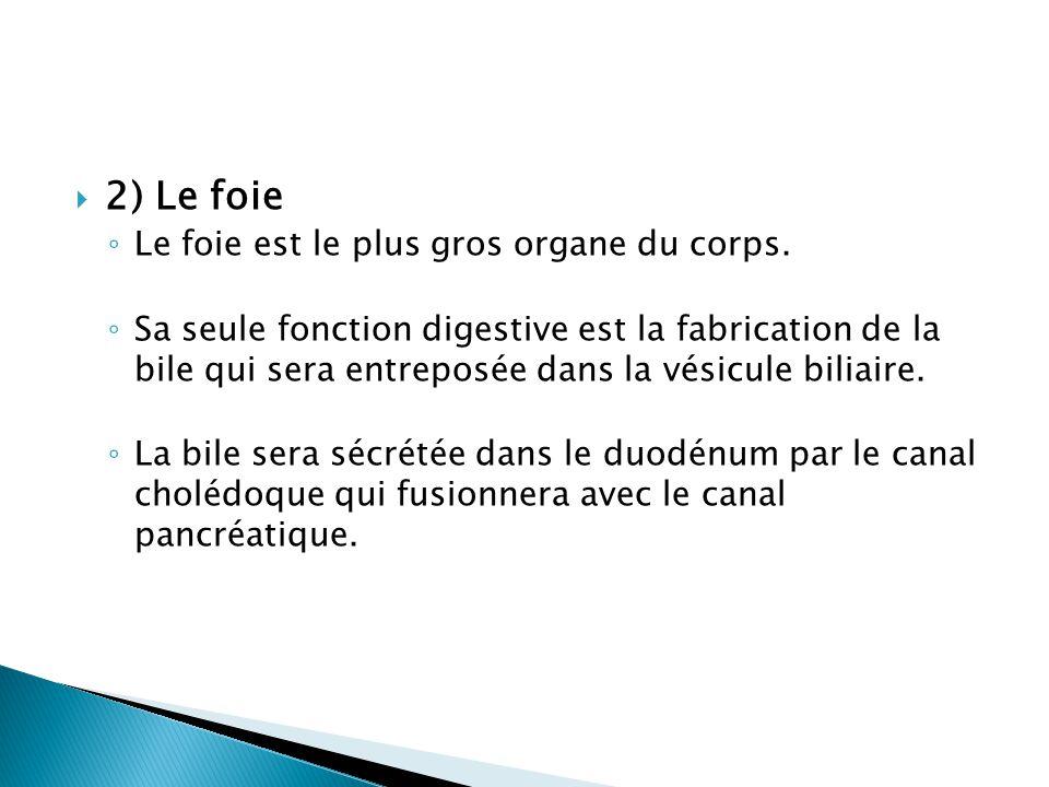 2) Le foie Le foie est le plus gros organe du corps.