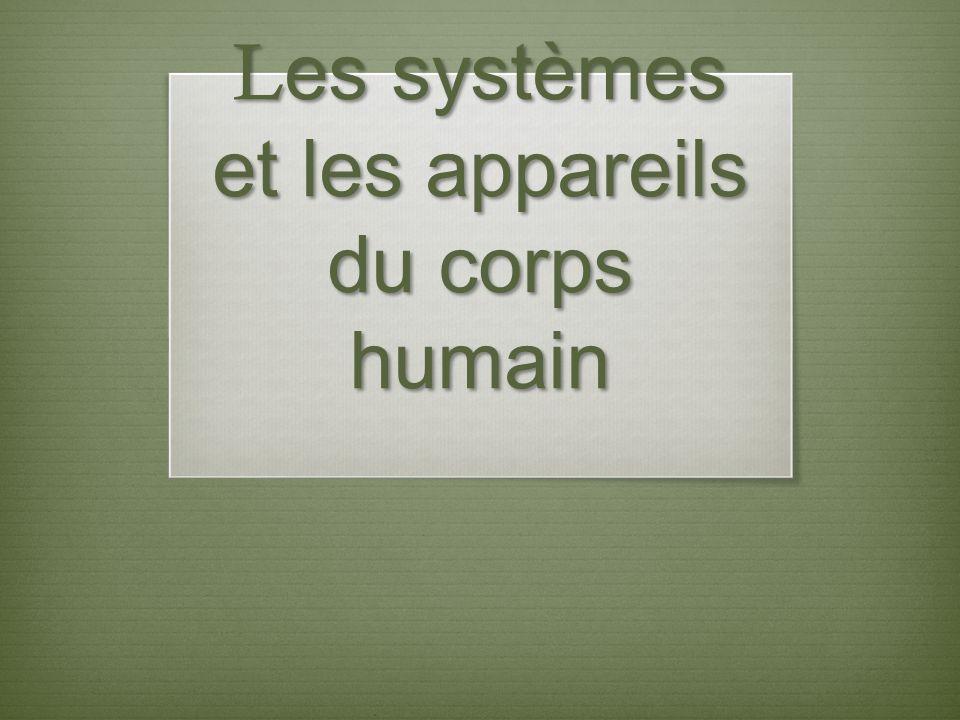 Les systèmes et les appareils du corps humain