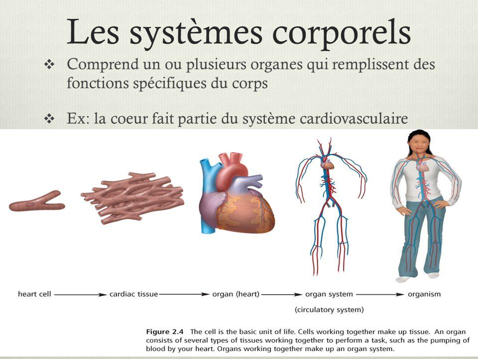 Les systèmes corporels