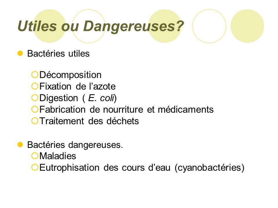 Utiles ou Dangereuses Décomposition Fixation de l'azote