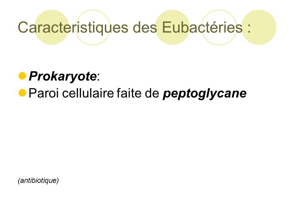Caracteristiques des Eubactéries :
