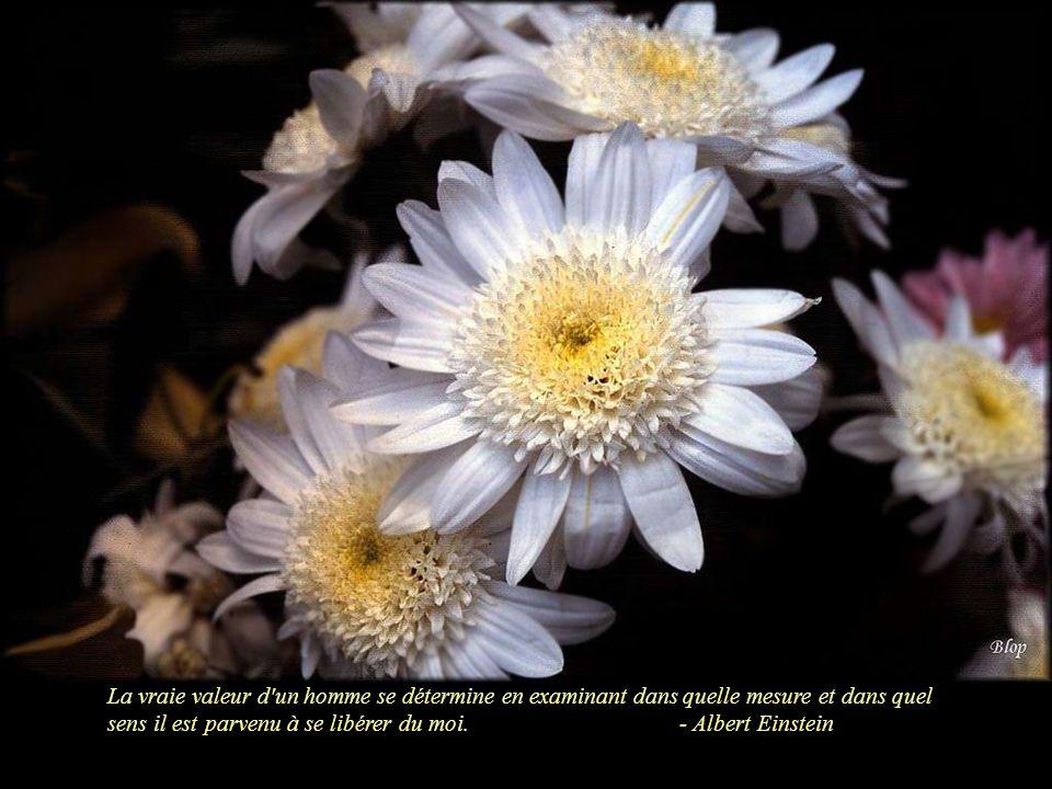 D cors floraux et quelques citations d albert einstein for Dans quel sens tourne la terre