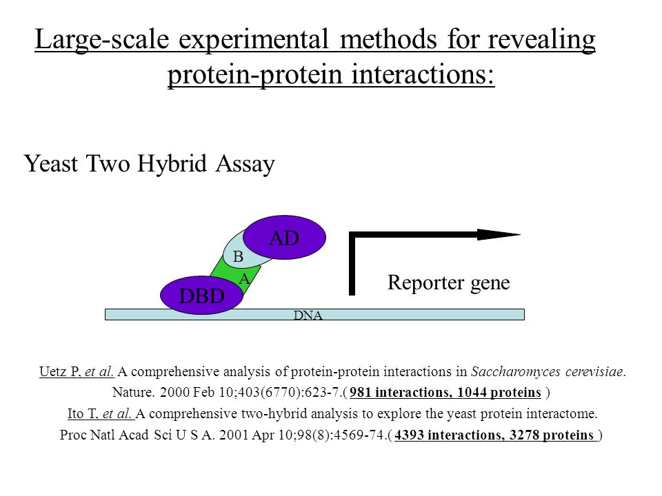 yeast two hybrid analysis of protein protein interactions The yeast two-hybrid system has provided a powerful method for analysis of protein–protein interactions, especially when the domains of the protein involved in the interaction can be defined (6, 7).