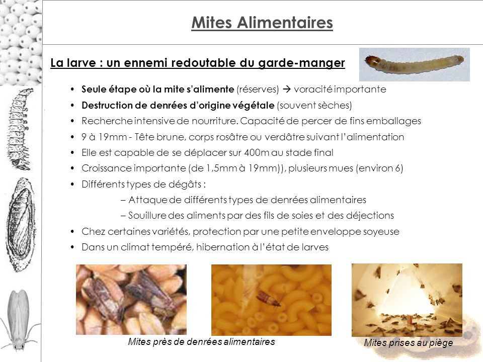 Difference Mites Alimentaires Mites Vetements