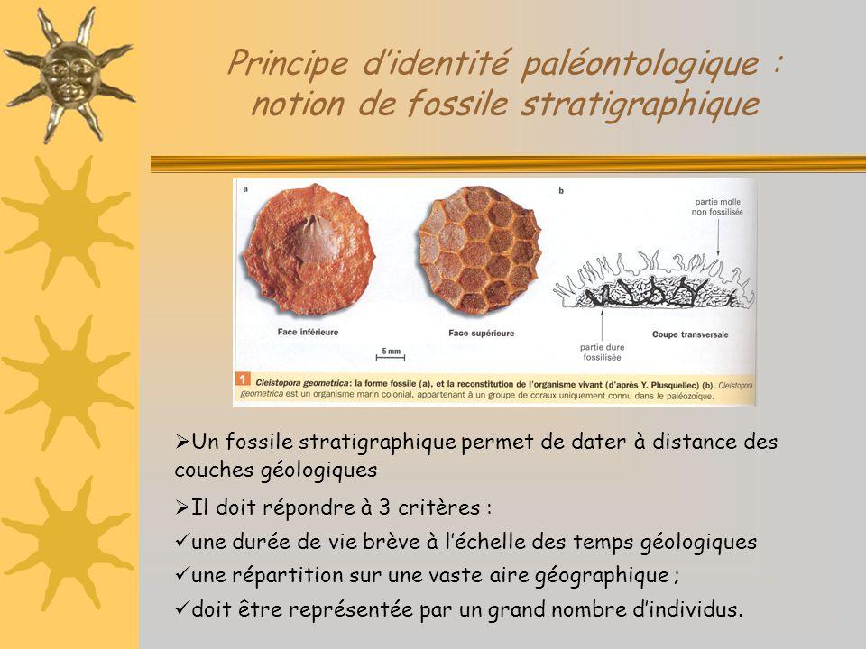 Principe d'identité paléontologique : notion de fossile stratigraphique