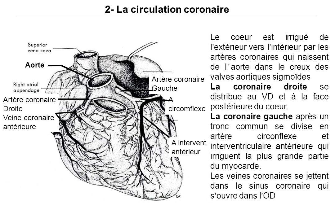 2- La circulation coronaire
