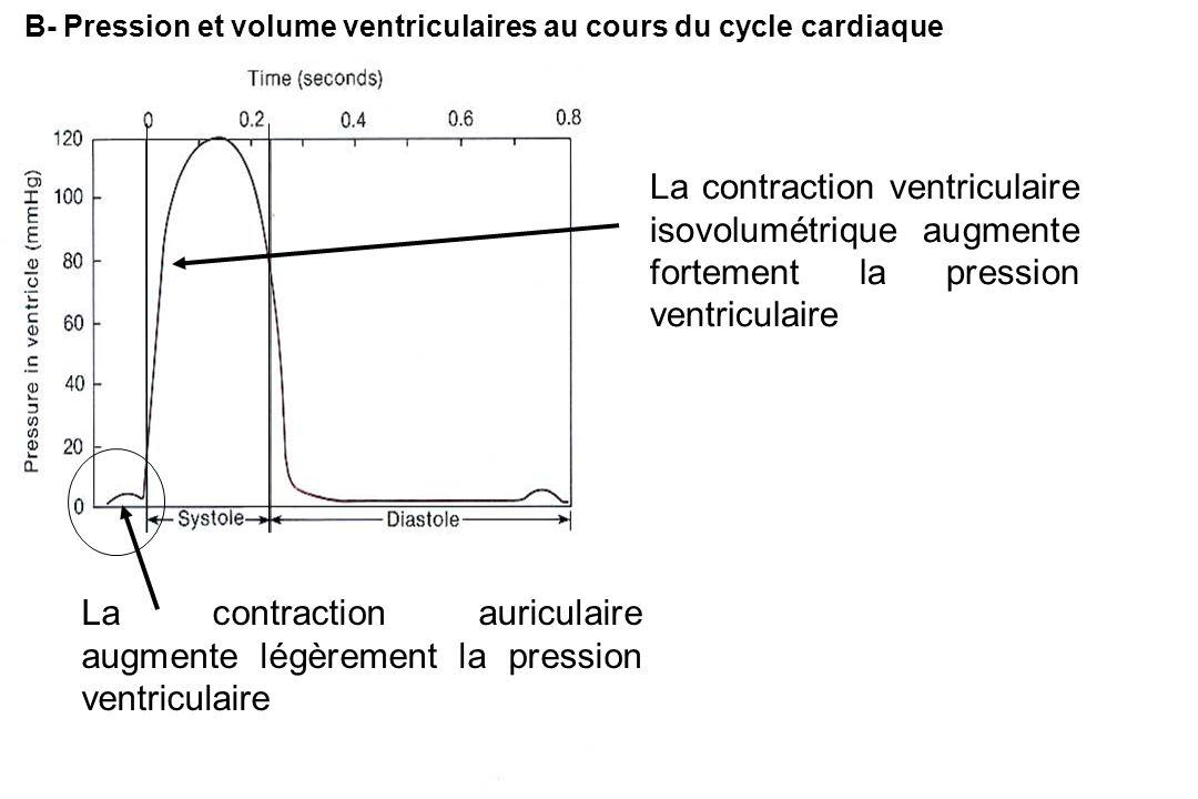 B- Pression et volume ventriculaires au cours du cycle cardiaque
