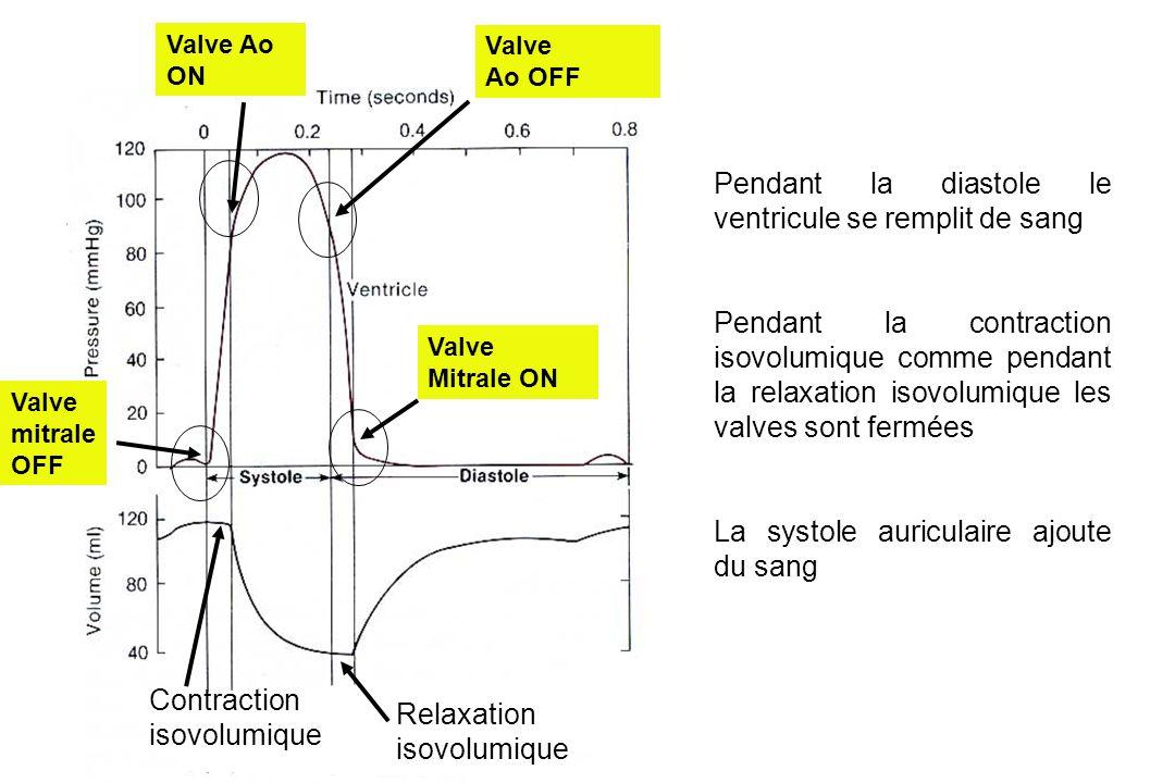 Pendant la diastole le ventricule se remplit de sang