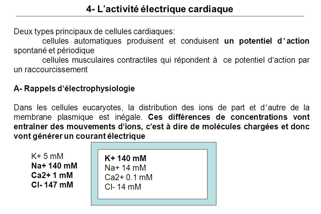 4- L'activité électrique cardiaque
