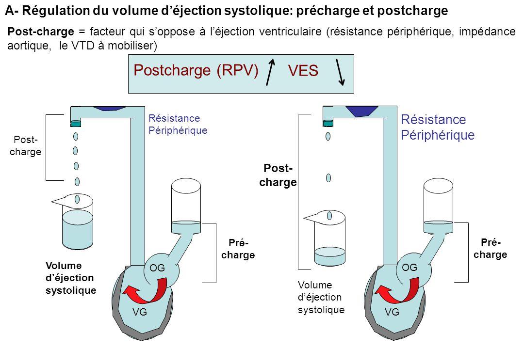 A- Régulation du volume d'éjection systolique: précharge et postcharge