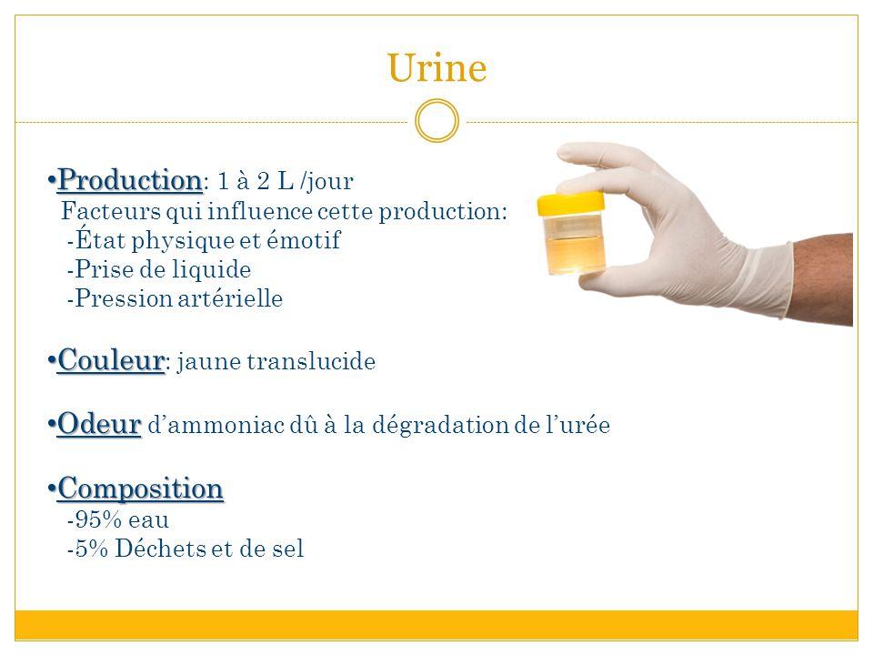 Urine Production: 1 à 2 L /jour Couleur: jaune translucide