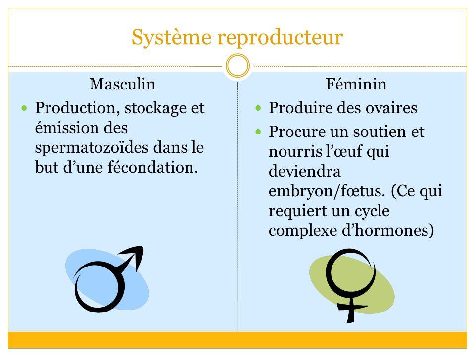 Système reproducteur Masculin