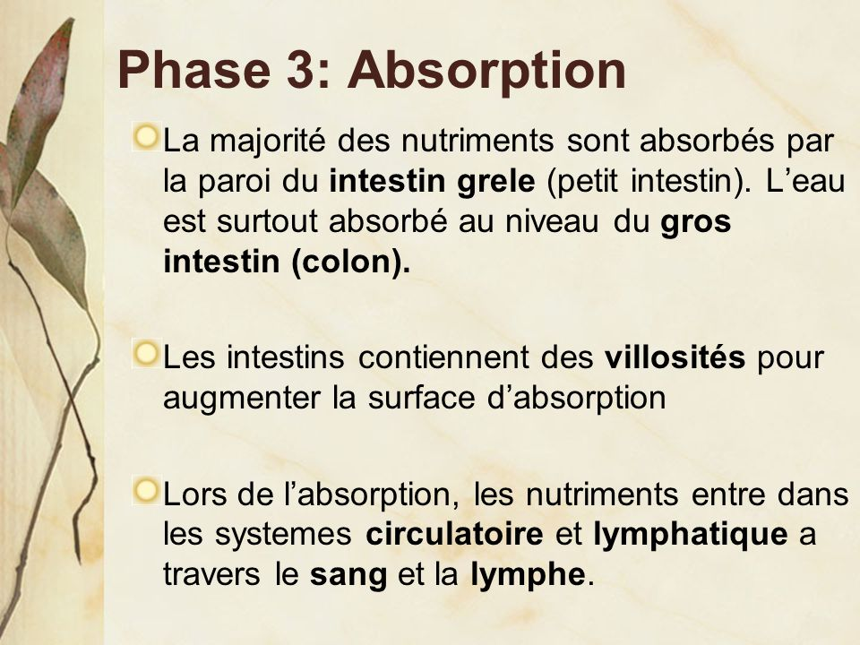 Phase 3: Absorption