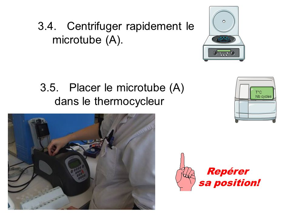 3.4. Centrifuger rapidement le microtube (A).