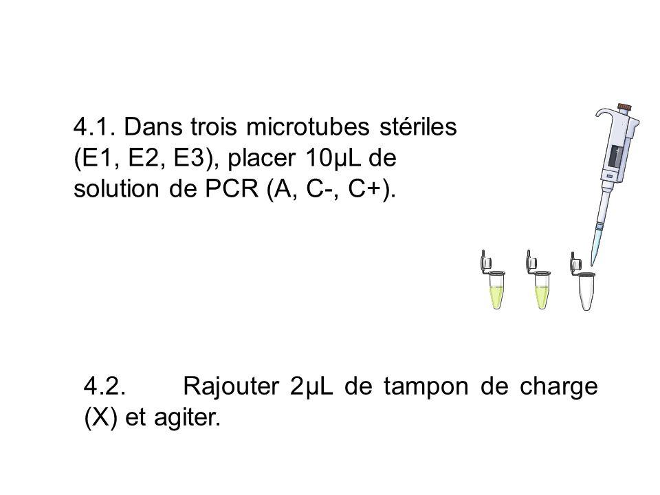 4.1. Dans trois microtubes stériles (E1, E2, E3), placer 10µL de solution de PCR (A, C-, C+).