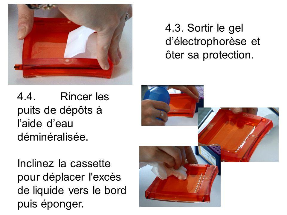 4.3. Sortir le gel d'électrophorèse et ôter sa protection.