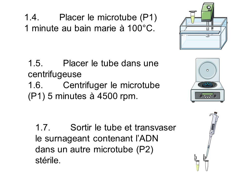 1.4. Placer le microtube (P1) 1 minute au bain marie à 100°C.