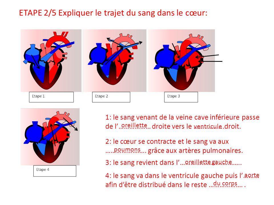 ETAPE 2/5 Expliquer le trajet du sang dans le cœur: