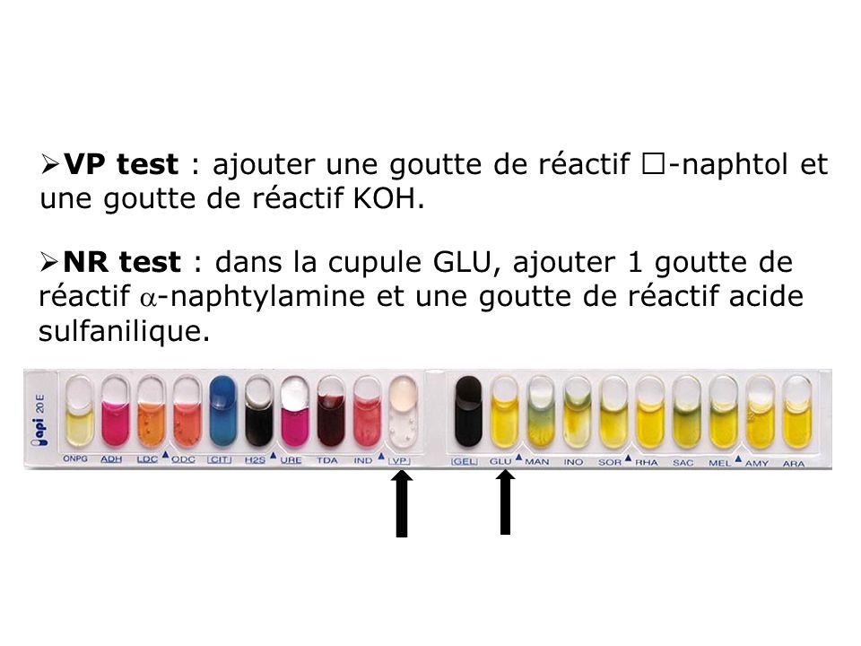 VP test : ajouter une goutte de réactif -naphtol et une goutte de réactif KOH.