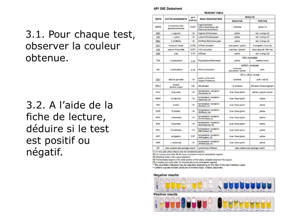 3.1. Pour chaque test, observer la couleur obtenue.