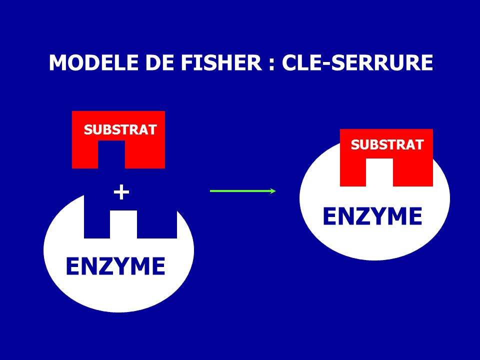 MODELE DE FISHER : CLE-SERRURE