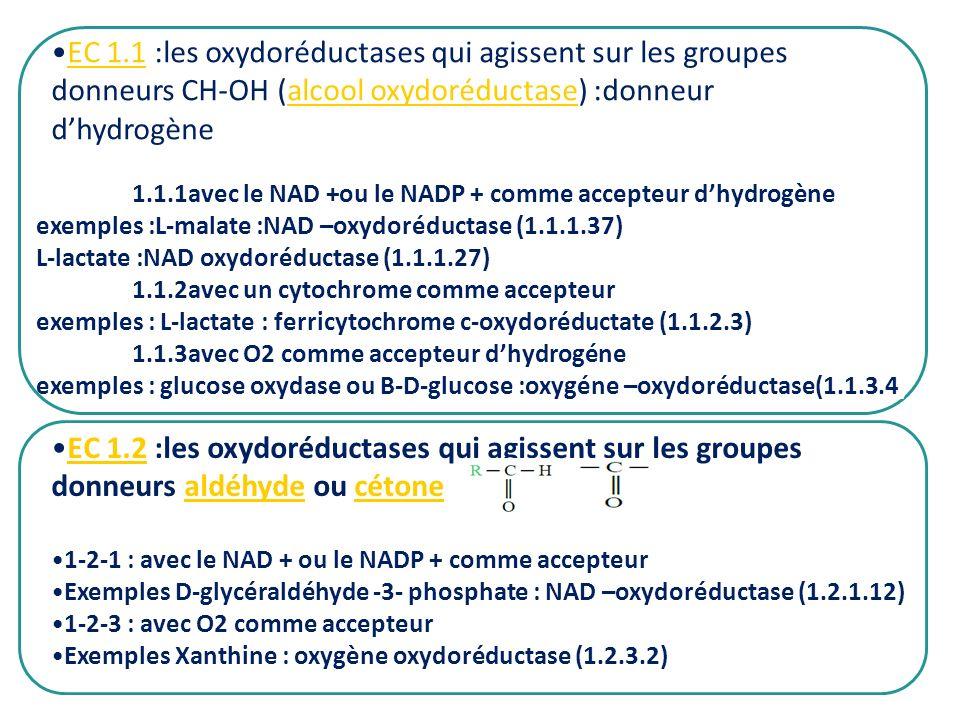 EC 1.1 :les oxydoréductases qui agissent sur les groupes donneurs CH-OH (alcool oxydoréductase) :donneur d'hydrogène