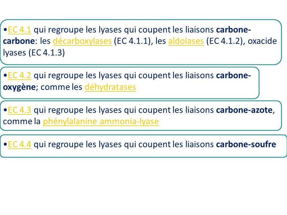 EC 4.1 qui regroupe les lyases qui coupent les liaisons carbone-carbone: les décarboxylases (EC 4.1.1), les aldolases (EC 4.1.2), oxacide lyases (EC 4.1.3)