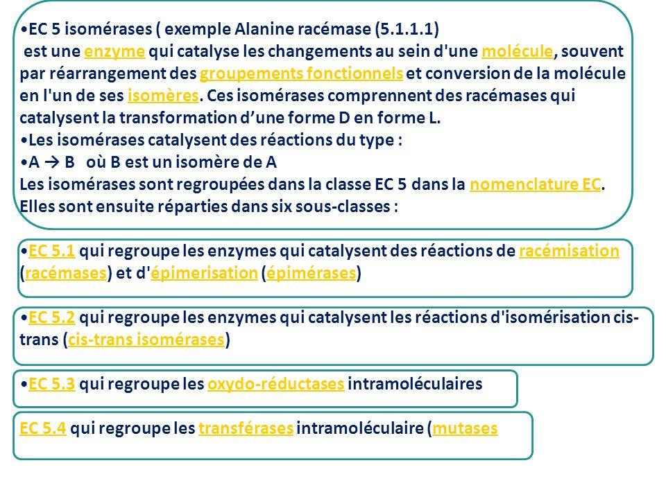 EC 5 isomérases ( exemple Alanine racémase (5.1.1.1)