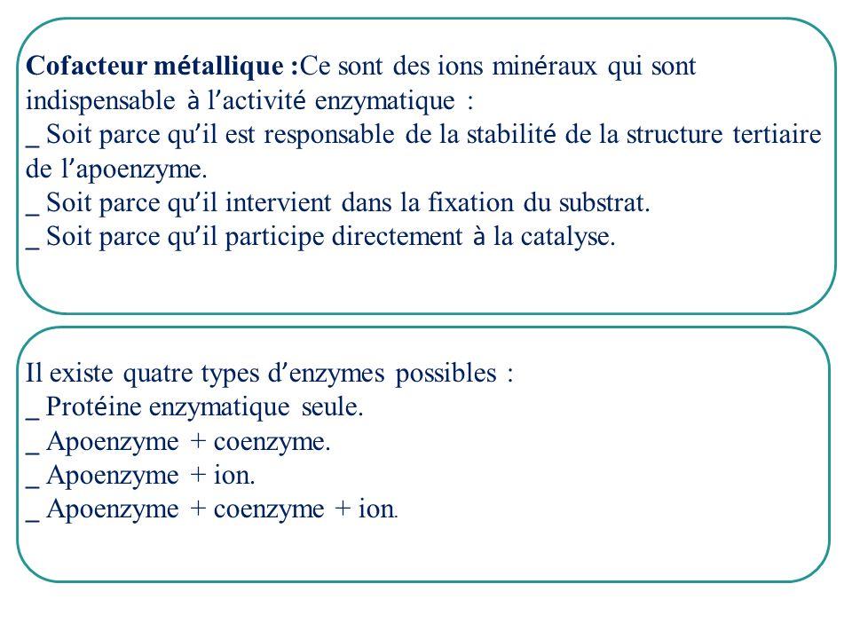 Cofacteur métallique :Ce sont des ions minéraux qui sont indispensable à l'activité enzymatique :