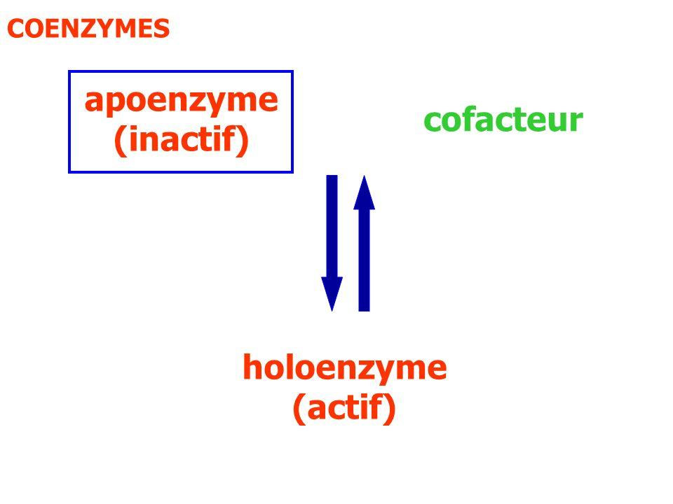 apoenzyme (inactif) holoenzyme (actif)