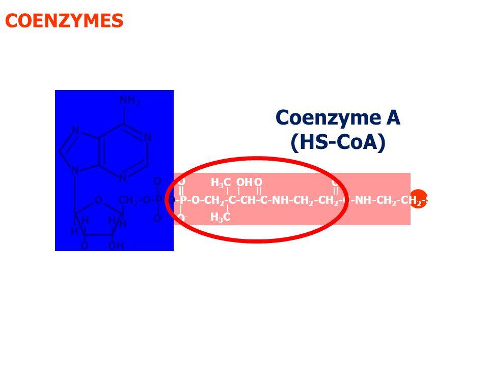 Coenzyme A (HS-CoA) COENZYMES NH2 N N N N O O H3C OH O O O