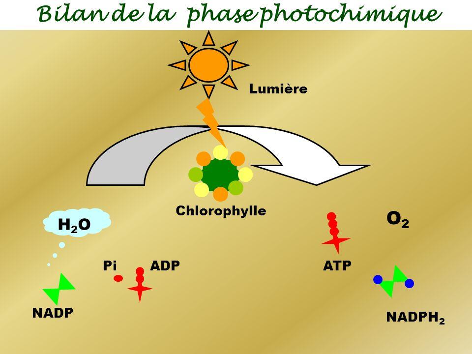 Bilan de la phase photochimique