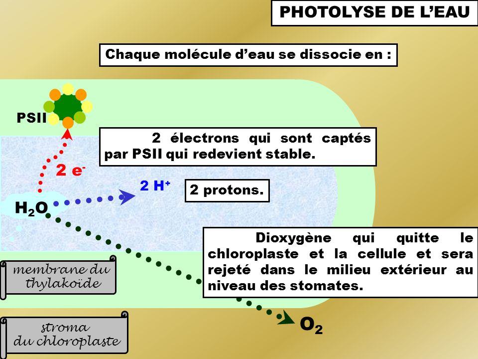 Chaque molécule d'eau se dissocie en :